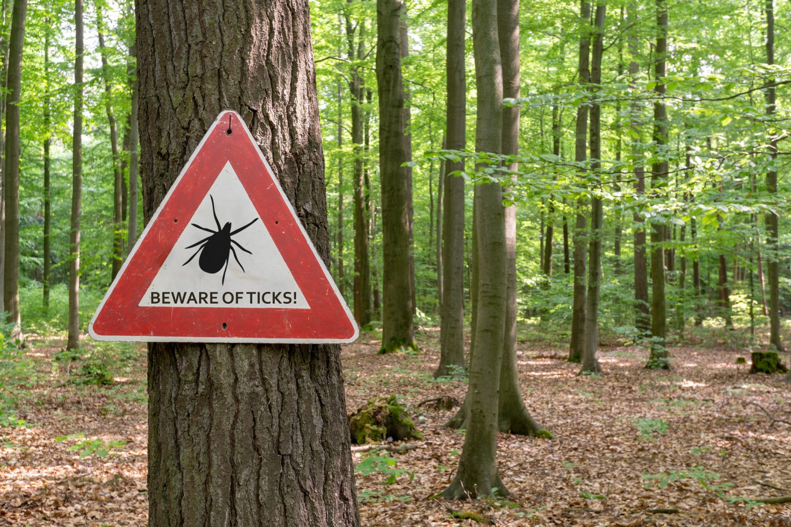 Ticks- Detection & Treatment
